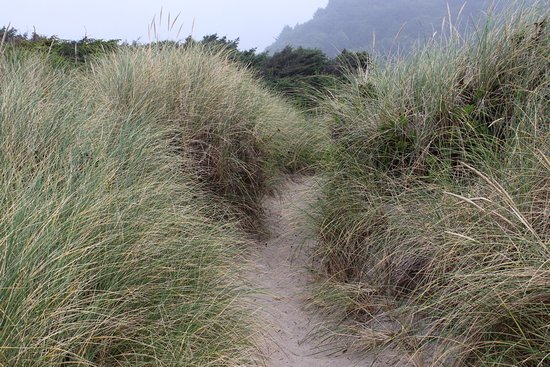 Manhattan Beach State Recreation Site : The pass through the dunes