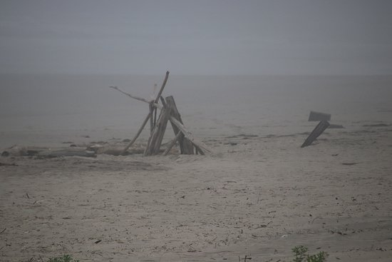 Manhattan Beach State Recreation Site : Driftwood