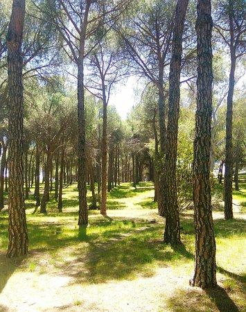 Parque Forestal El Gurugu