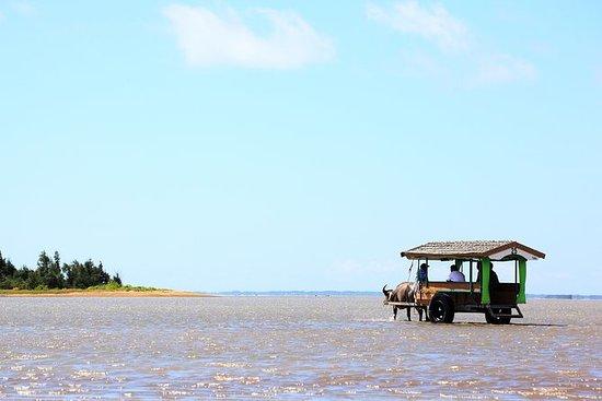 Iriomote Island og Yubu Island Tour