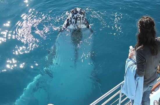Hervey Bay Premium Whale Watching...