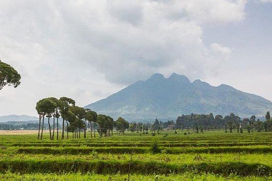 6天卢旺达大猩猩和黑猩猩野生动物园。