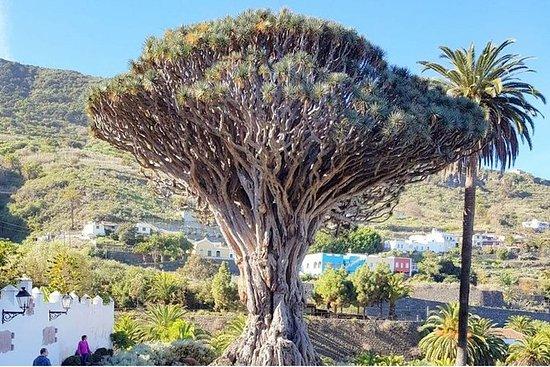 テネリフェ島のParque del Dragoでの鳥と爬虫類のエコルート