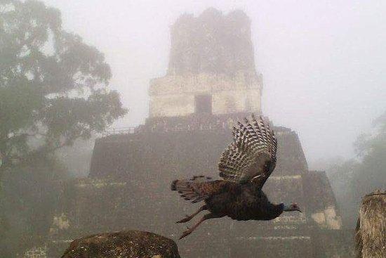 Tikal Fuglekikking og arkeologisk