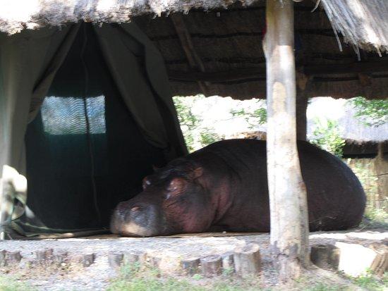 Kafue National Park, Zambia: Friendly Wildlife