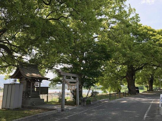 クスノキ巨樹群