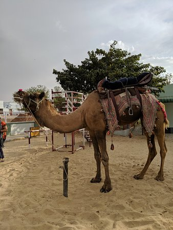 national research centre on camel bikaner updated 2019 what to rh tripadvisor in