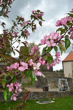 jaro na zahradě u hradu Svojanov
