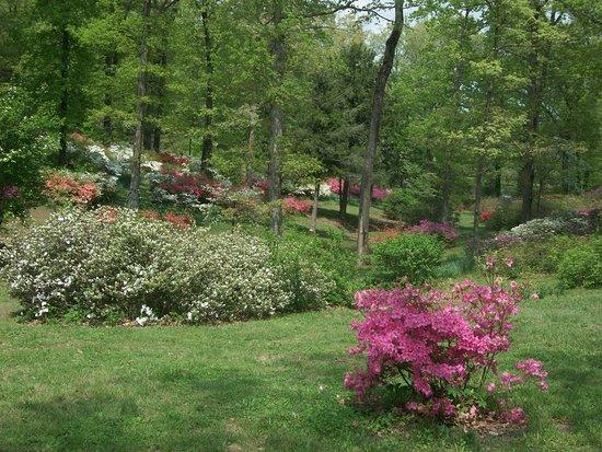Pinecrest Azalea Gardens