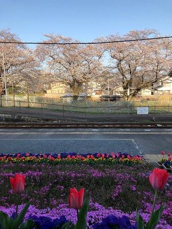 Tochigi Prefecture, اليابان: 桜咲く久下田駅(2019年4月6日撮影)(4)