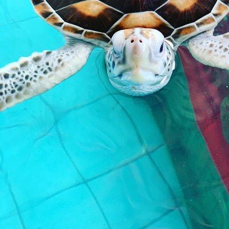 Turtle Conservation Center