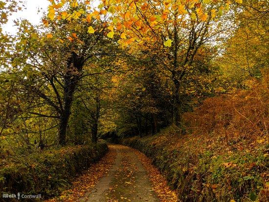 Launceston, UK: Autumn colours at North Hill
