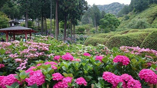 Mimuroto-ji Temple Garden