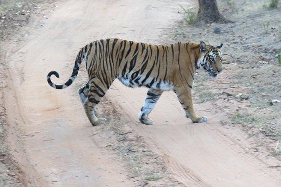Bandhavgarh Nationalpark