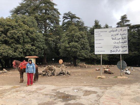 Macacos selvagens e Cedros