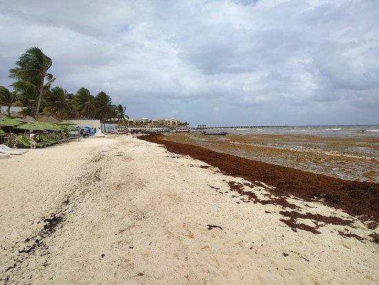 Playa del Carmen at May 5th, 2019. Just a week ago there was no seaweed at all. #sargassum #sargasso #seaweed #beach #rivieramaya