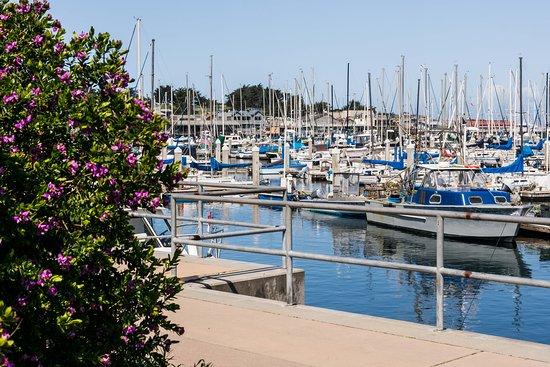 Monterey Municipal Wharf 2