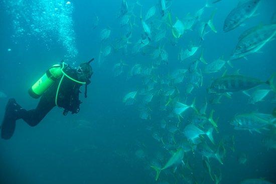 Tobruk Dive Centre Hervey Bay