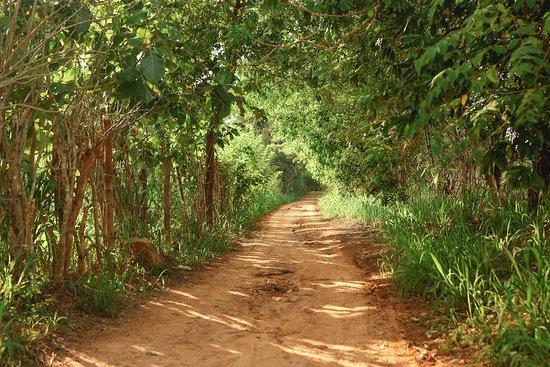 Landscape - Picture of Camp Hasthi, Udawalawa - Tripadvisor
