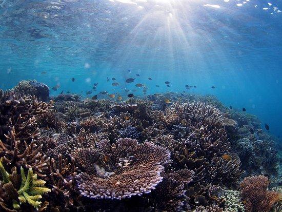 Dive Wonderful Indonesia