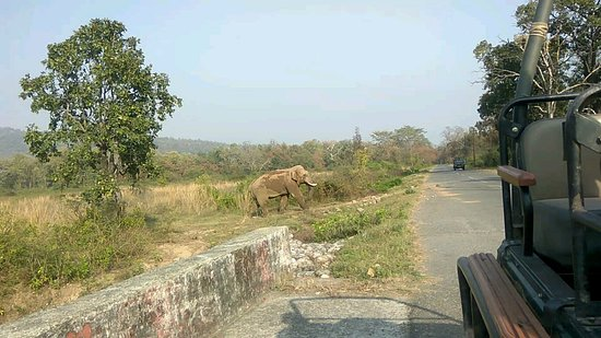 Jim Corbett National Park, India: Atiq corbett