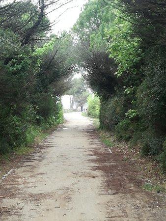 Bilde fra Bibione
