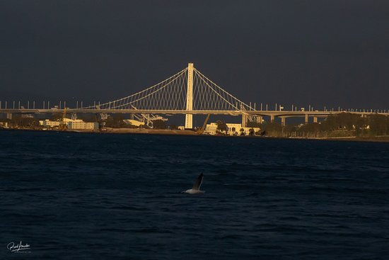 San Francisco Bay Sunset Catamaran Cruise: The sun broke through the clouds to give me this great view of the Bay Bridge!