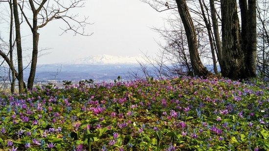 Otokoyama Nature Park