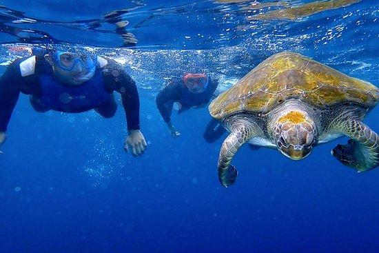 Kayak avec les dauphins et snorkeling...