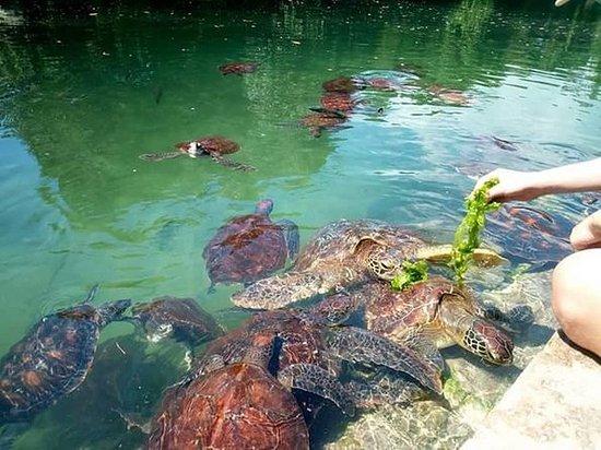 Nungwi水族館とMnarani海洋保護区の保護池入場券