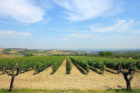 Besøk Marchesi de Cordano vingård og...