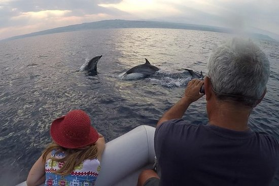 Delfinbeobachtung - Auf der Suche...