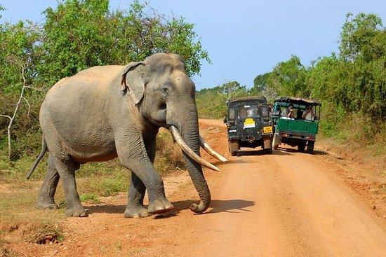 Eventyrtur i Sri Lanka (17 dager)
