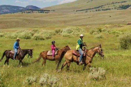 Randonnée à cheval guidée à travers le sentier des fleurs bleues : Blue Flower Trail Ride