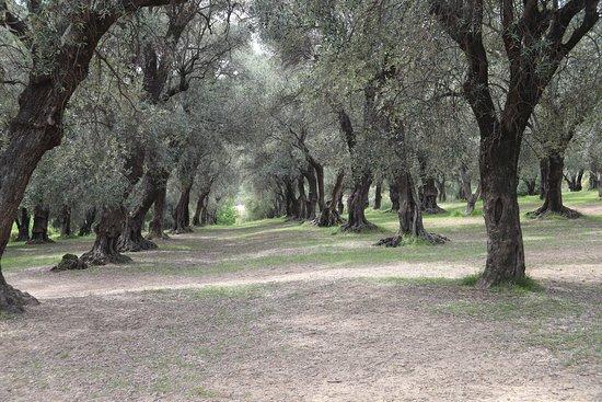 Le Parc Du Pian