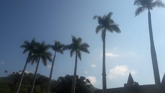 Largo Das Palmeiras Imperiais