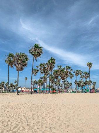 venice beach los angeles updated june 2019 top tips before you rh tripadvisor ie