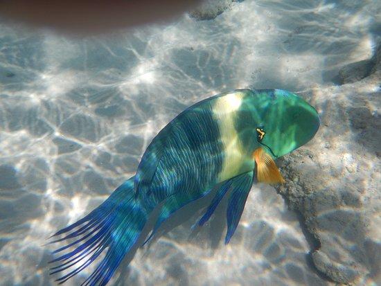 Albatros Palace Resort: Faune sous-marine :