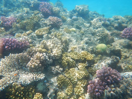 Albatros Palace Resort: Faune sous-marine : coraux multicolors