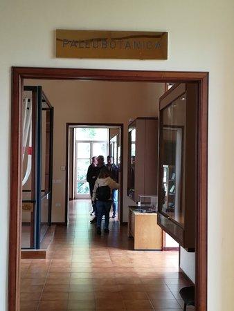Museo di Paleobotanica ed Etnobotanica