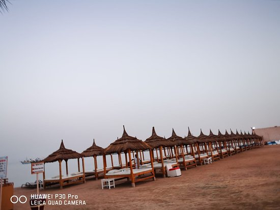 Albatros Palace Resort Resmi