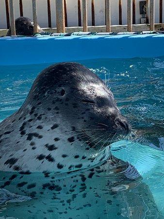 Dolphin Resort Iruka Fureai