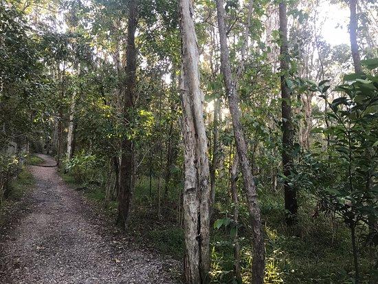 Alex Forest Conservation Area