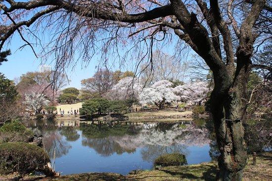 Shinjuku Gyoen National Garden: The Japanese Gardens