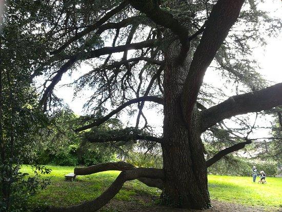 Giardino Botanico Colla