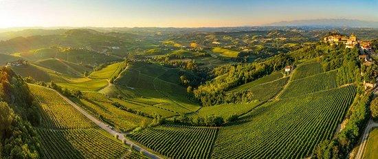 Piedmont Wine Tours e Truffle Hunting