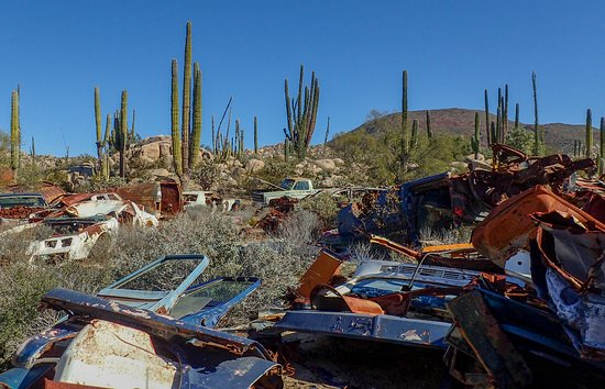 Junkyard in the cactus field