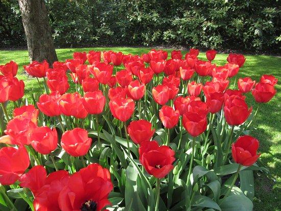 Skip the Line: Keukenhof Gardens Direct Entrance Ticket: Tulipes a Keukenhof