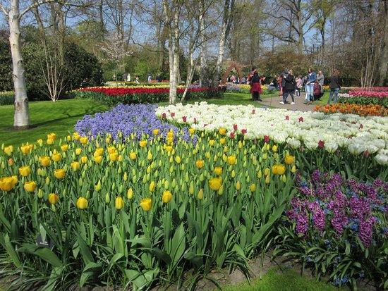 Skip the Line: Keukenhof Gardens Direct Entrance Ticket: Que de couleurs , incroyablement beau.