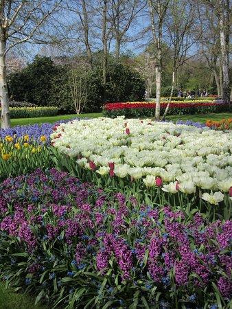 Skip the Line: Keukenhof Gardens Direct Entrance Ticket: tellement de beaux agencements.
